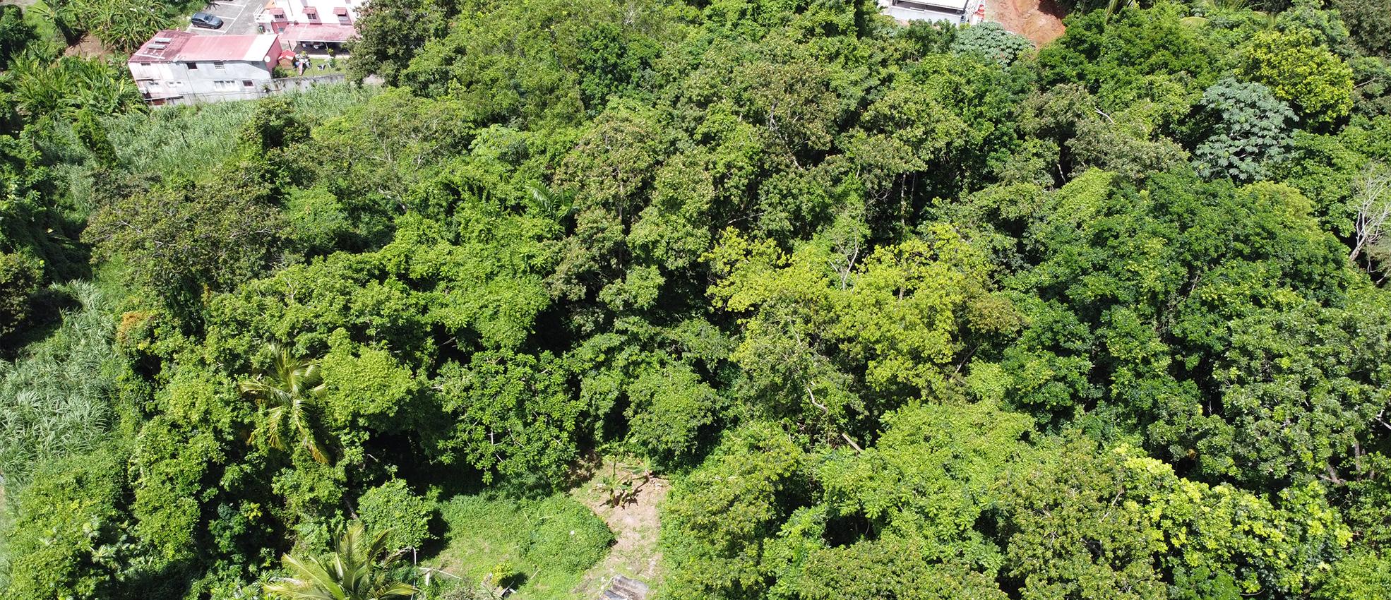 TERRAIN 5475m2 RAVINE VILAINE FORT-DE-FRANCE